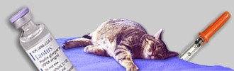 Diabetes-Katzen Forum
